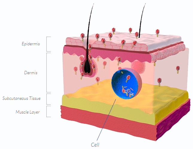 skin and cell penetration
